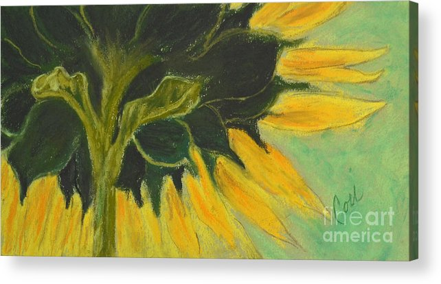 Sunflower Acrylic Print featuring the drawing Sunny Side Up by Cori Solomon