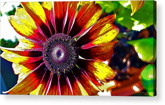 Summer Acrylic Print featuring the photograph Summer by Phil Haultain