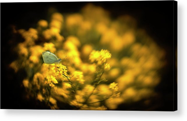 Butterfly Acrylic Print featuring the photograph Yellow Island by Michal Gulas
