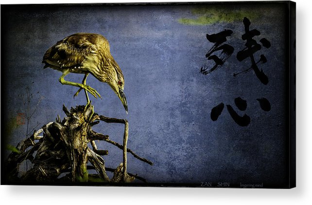 American Bittern Acrylic Print featuring the mixed media American Bittern With Brush Calligraphy Lingering Mind by Peter v Quenter