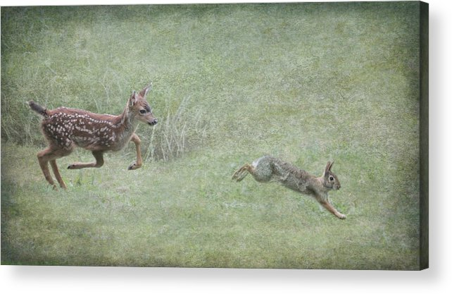 Bambi Acrylic Print featuring the photograph Bambi And Thumper by Angie Vogel