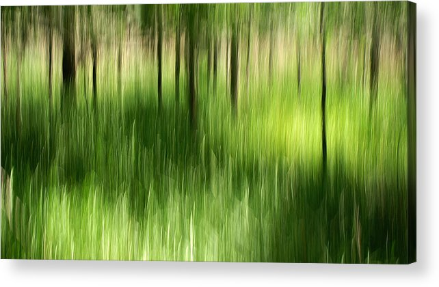 Palmetto State Park Acrylic Print featuring the photograph Palmetto Spring by Bill Morgenstern