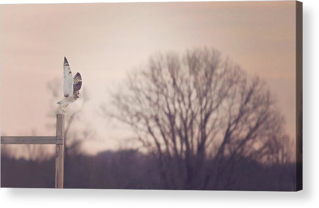Winter Acrylic Print featuring the photograph Short Eared Owl At Dusk by Carrie Ann Grippo-Pike