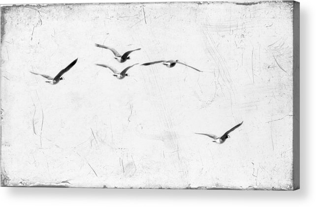 Geese Acrylic Print featuring the photograph The Leader by Rebecca Cozart