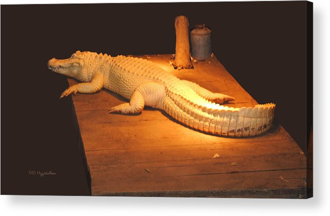 Alligator Acrylic Print featuring the photograph Albino Alligator by DiDi Higginbotham