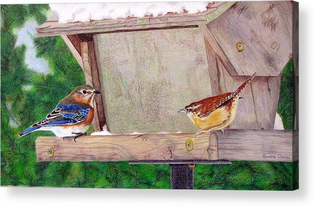 Bird Acrylic Print featuring the drawing New Girl In Town by Sandra Chase