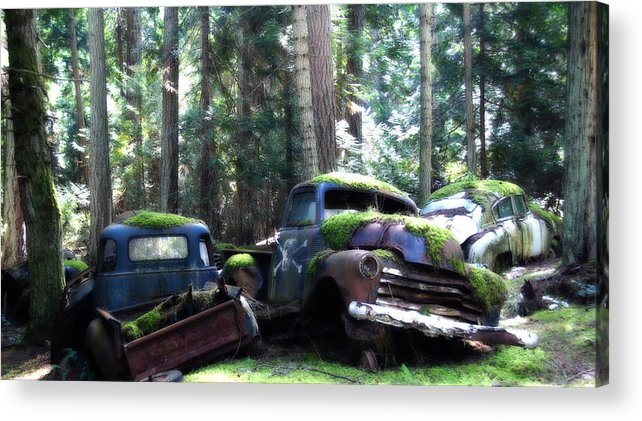 Vintage Cars Acrylic Print featuring the photograph Car Lot In The Forest by Diane Smith