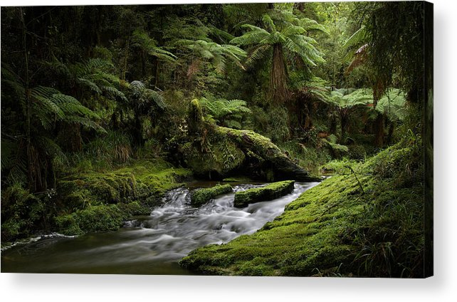Tree Ferns Acrylic Print featuring the photograph Islands Of Green 2 by Peter Prue