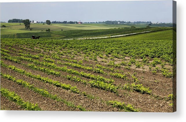 Amish Acrylic Print featuring the photograph Kalona Scape by Kelly Morrow