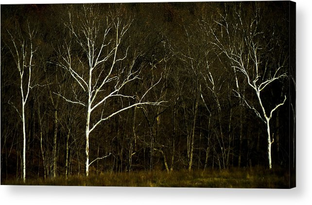 Acrylic Print featuring the photograph Light In The Darkness by Jennifer Dirnbeck