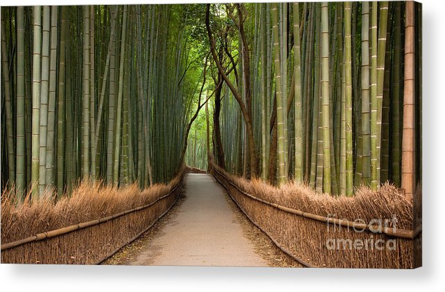 Arashiyama Acrylic Print featuring the photograph Path Through A Bamboo Grove In Kyoto by Ei Katsumata