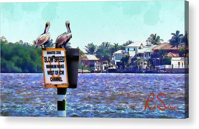 Birds Acrylic Print featuring the photograph Pelican by Robert Salazar