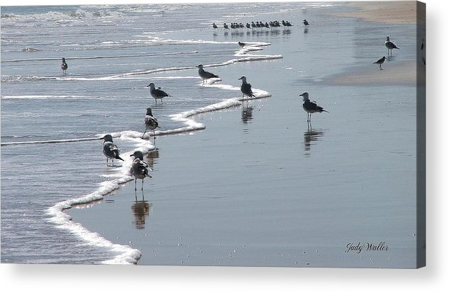 Beach Acrylic Print featuring the photograph Sunning Gulls by Judy Waller