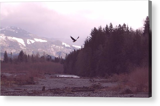 Eagle Acrylic Print featuring the photograph The Freedom To Fly by J D Banks