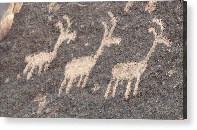 Native American Art Acrylic Print featuring the photograph Three Goats by David Arment