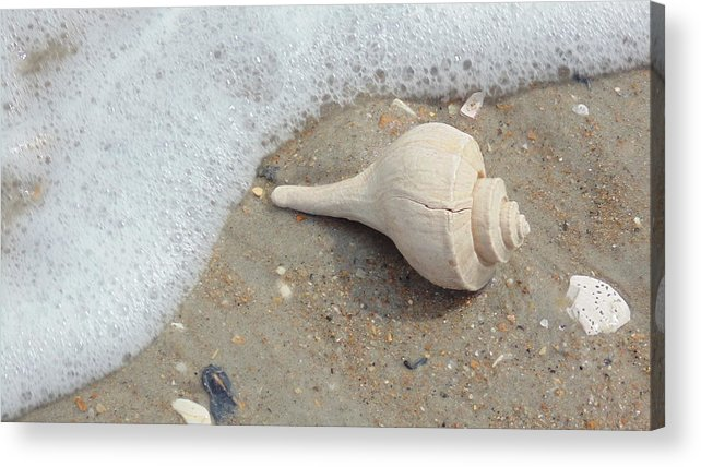 Conch Acrylic Print featuring the pyrography Conch Shell Vacation by Robert Scarborough