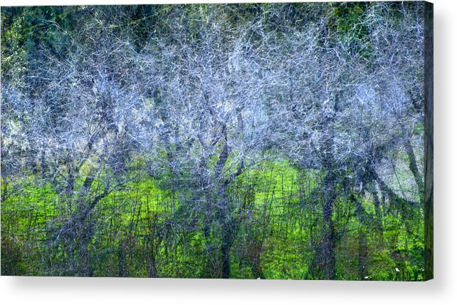 Bosques Acrylic Print featuring the photograph Forest City by Guido Montanes Castillo