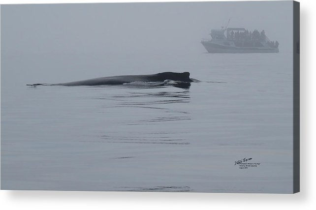 Whale Acrylic Print featuring the photograph Humpback Whale In The Fog by Steph Maxson