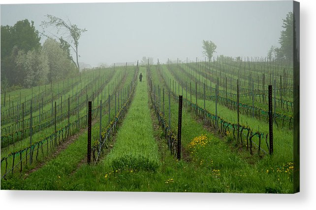 Vine Acrylic Print featuring the photograph Lone Figure In Vineyard In The Rain On The Mission Peninsula Michigan by Mary Lee Dereske
