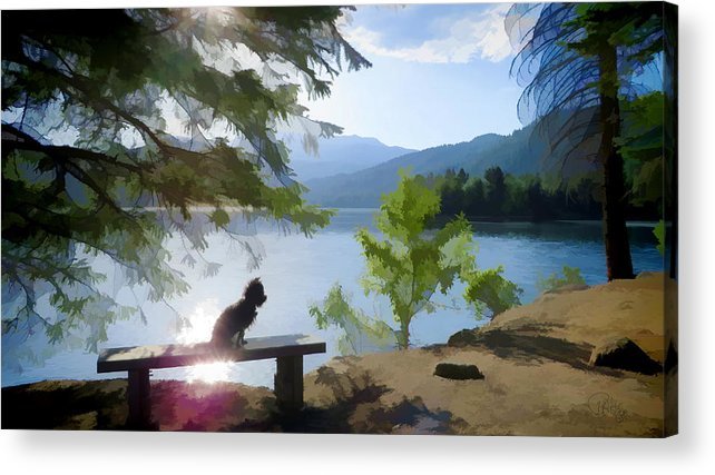 Dog Acrylic Print featuring the photograph Peaceful Puppy by Peter Hogg