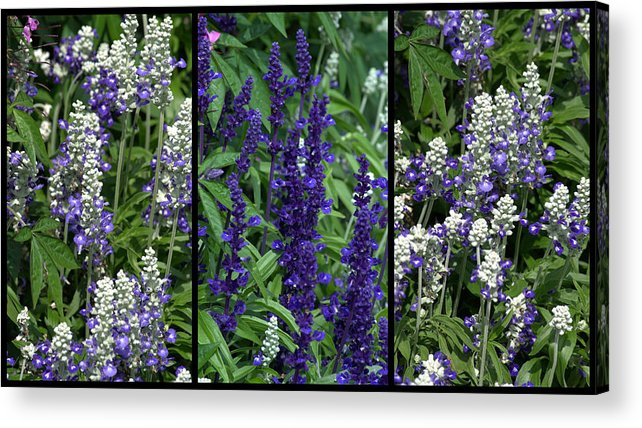 Purple Acrylic Print featuring the photograph Purple Flowers by Tikvah's Hope