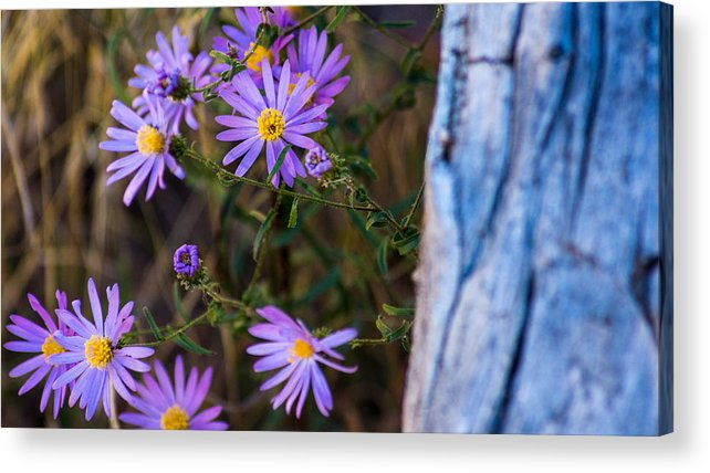 Landscape Acrylic Print featuring the photograph Purples And Blue by Kris and Sydney Riccella Kitzmiller