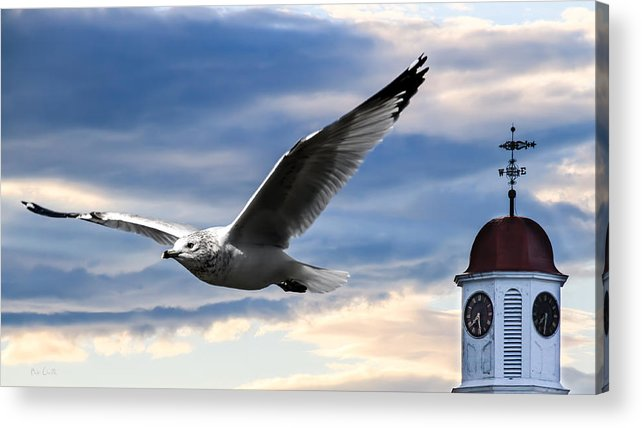 Seagull Acrylic Print featuring the photograph Seagull And Clock Tower by Bob Orsillo