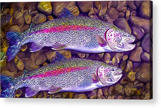 Fish Acrylic Print featuring the photograph Two Beauties - Trout by Laird Roberts