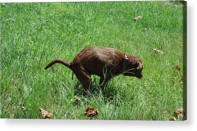 Dogs Pretty Nice Friendly Nature Wildlife Green Brown Acrylic Print featuring the photograph dog by Monster Washburn