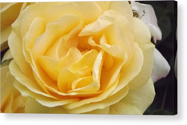 Yellow Acrylic Print featuring the photograph Hidden Center by Angelena Smith