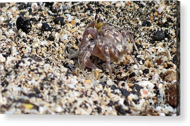 Crab Acrylic Print featuring the photograph Just Taking A Walk by Elizabeth Harshman