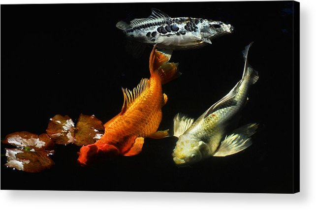 Koi Acrylic Print featuring the photograph Koi By The Lillies by Don Mann