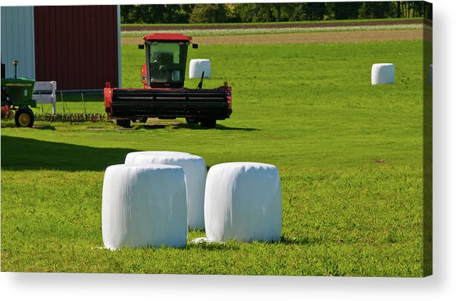 Barn Acrylic Print featuring the photograph Marshmallows - They're Ripe by Guy Whiteley