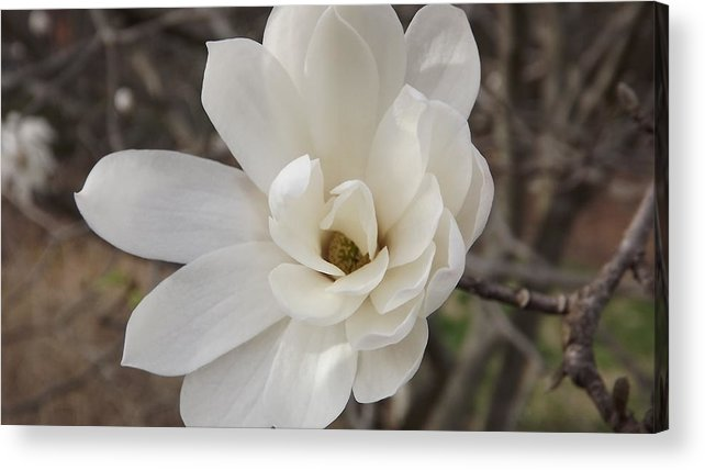 Flower Acrylic Print featuring the photograph Midday Flare by Angelena Smith