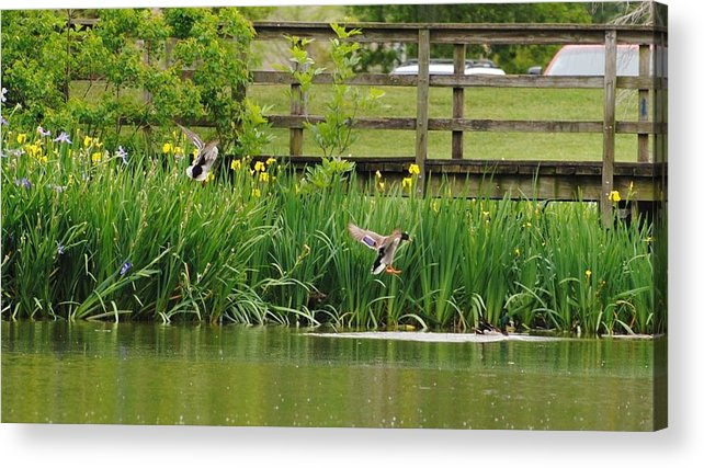 Landscape Acrylic Print featuring the photograph Park by John Blanchard