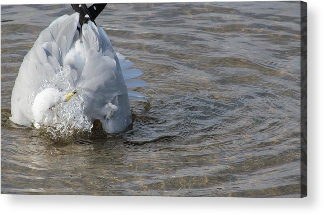 Lake Acrylic Print featuring the photograph Refreshing Splash by Loretta Pokorny