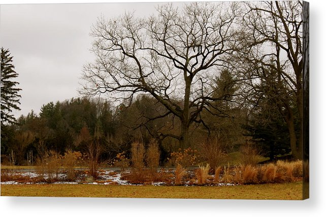 Trees Acrylic Print featuring the photograph Snowless Winter by Azthet Photography