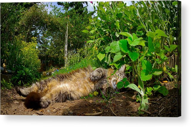 Cat Acrylic Print featuring the photograph Toufan by Rylee Stearnes