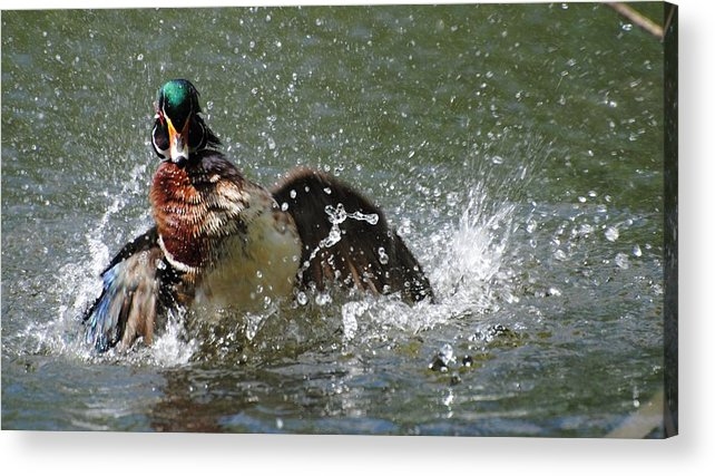 Wildlife Acrylic Print featuring the photograph Twisting by John Blanchard