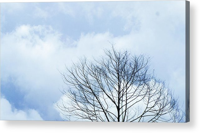Winter Fall White Sky Acrylic Print featuring the photograph Winter Tree by Adelista J