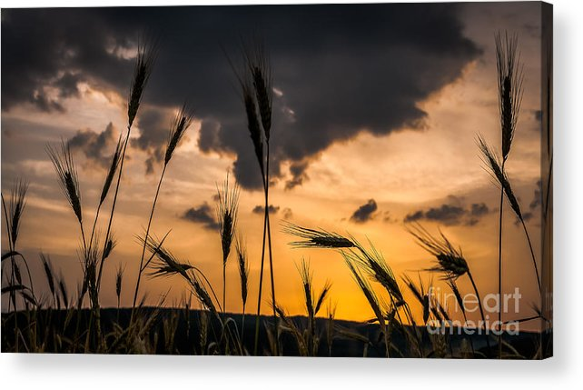 Summer Acrylic Print featuring the photograph Land Of Ukraine by Lyudmila Prokopenko