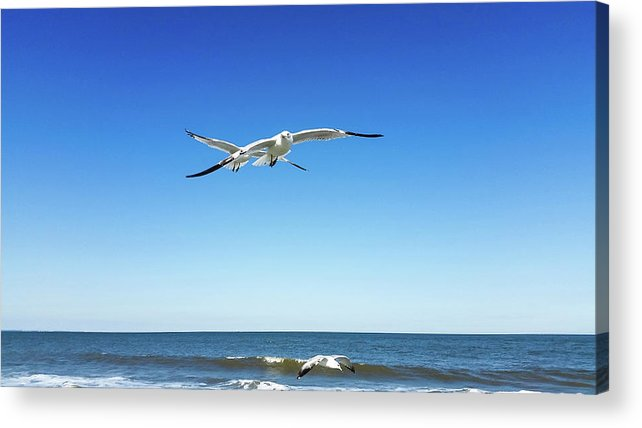 Acrylic Print featuring the photograph Air Play by Belinda Jane