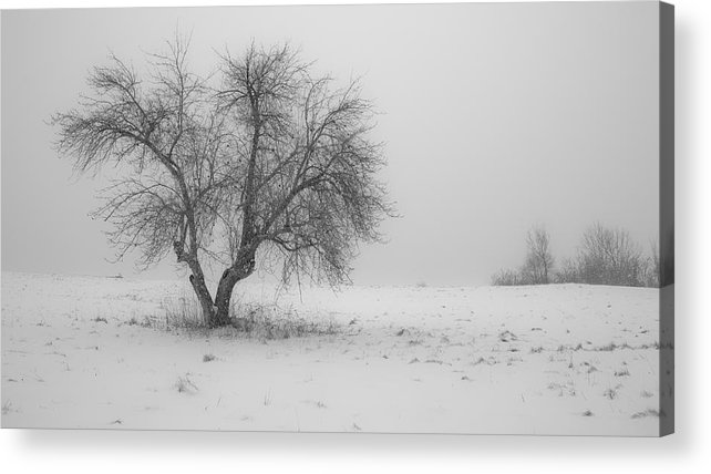 Tree Acrylic Print featuring the photograph Apple Tree In The Winter by Edward Myers