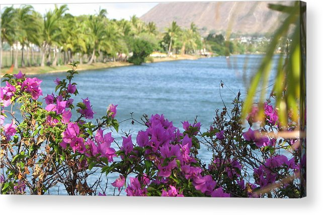 Hawaii Acrylic Print featuring the photograph Beautiful Waikiki by Kathryn Carlin