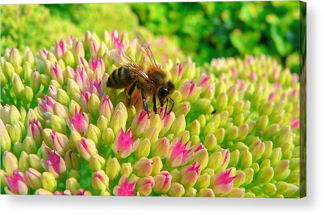 Flowers Acrylic Print featuring the photograph Bee On Flower by Larry Keahey