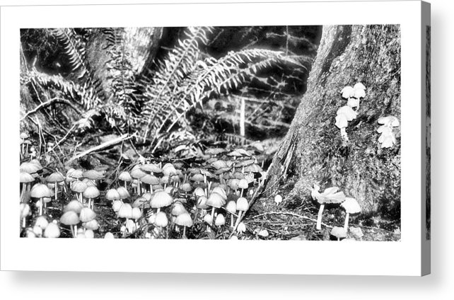 Black Acrylic Print featuring the photograph Caterpillars Playground 2 by J D Banks