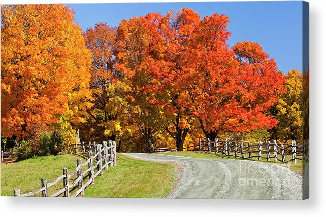Autumn Acrylic Print featuring the photograph Country Road Autumn by Alan L Graham