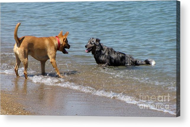 Schuminweb Acrylic Print featuring the photograph Dogs In Lake Michigan by Ben Schumin