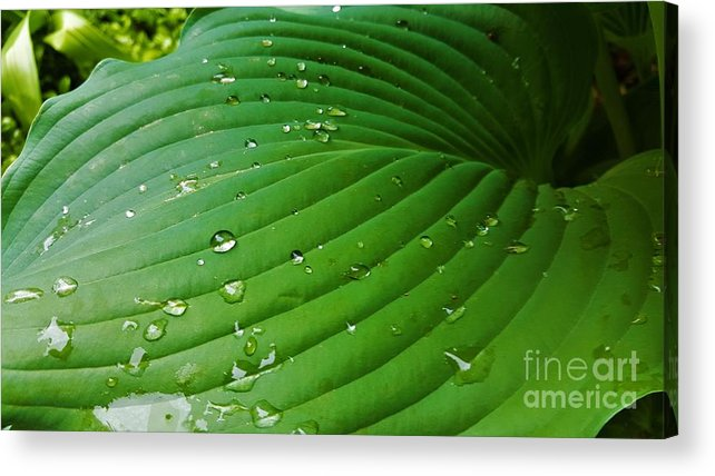 Drops Acrylic Print featuring the photograph Drops Of Spring Rain by Jessica T Hamilton