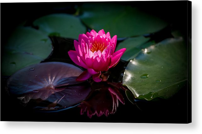 Pink Lily Acrylic Print featuring the photograph Fire Opal 2 by Jeff Partridge